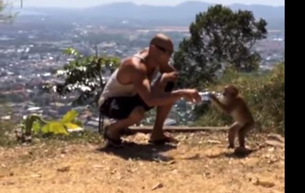 Наглый водохлеб, или как обезьяны получают свое