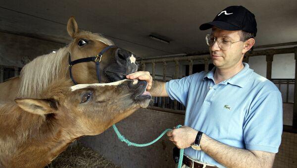 Первый в мире клон лошади тянется руке ученого. Италия