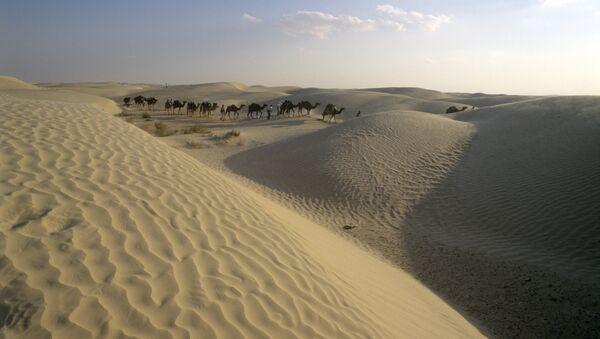 Экспедиция путешественника Яцека Палкевича в Сахару