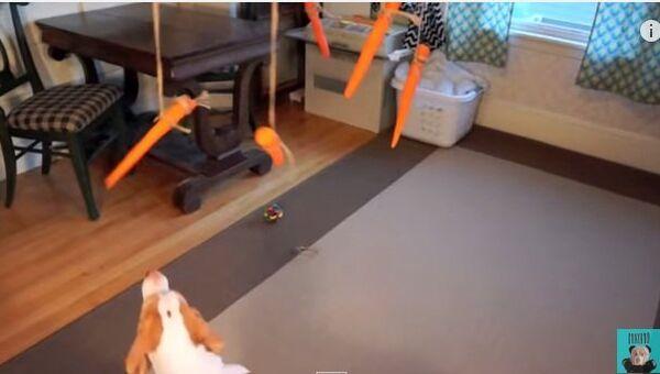 Собака и летающие морковки, или Удивительный аттракцион
