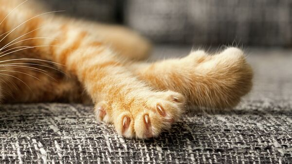 Лапы рыжего котенка