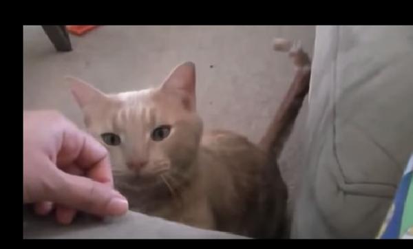 Коты созданы для того, чтобы их любить