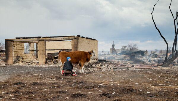 Женщина доит корову на сгоревшей улице деревни Новокурск Республики Хакасия. Архивное фото