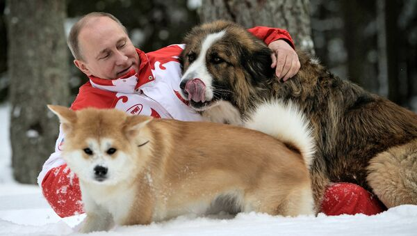 Президент России Владимир Путин с собаками Баффи и Юмэ на прогулке в Московской области
