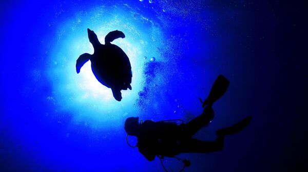 Морская черепаха плавает с дайвером