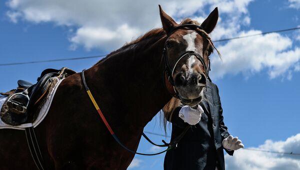 Соревнования по конному спорту. Архивное фото
