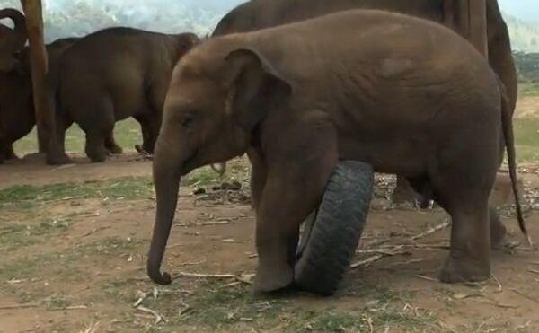 Как играют слонята