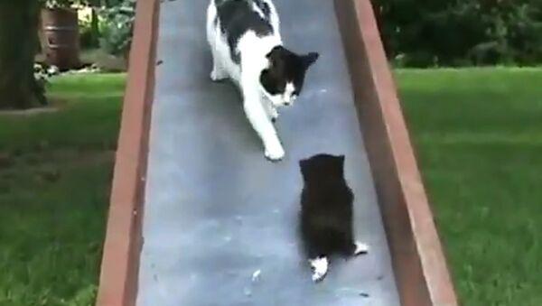 Детский сад для котят