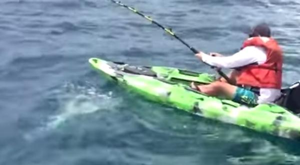 Ловись, рыбка, большая и маленькая, или Как поймать акулу