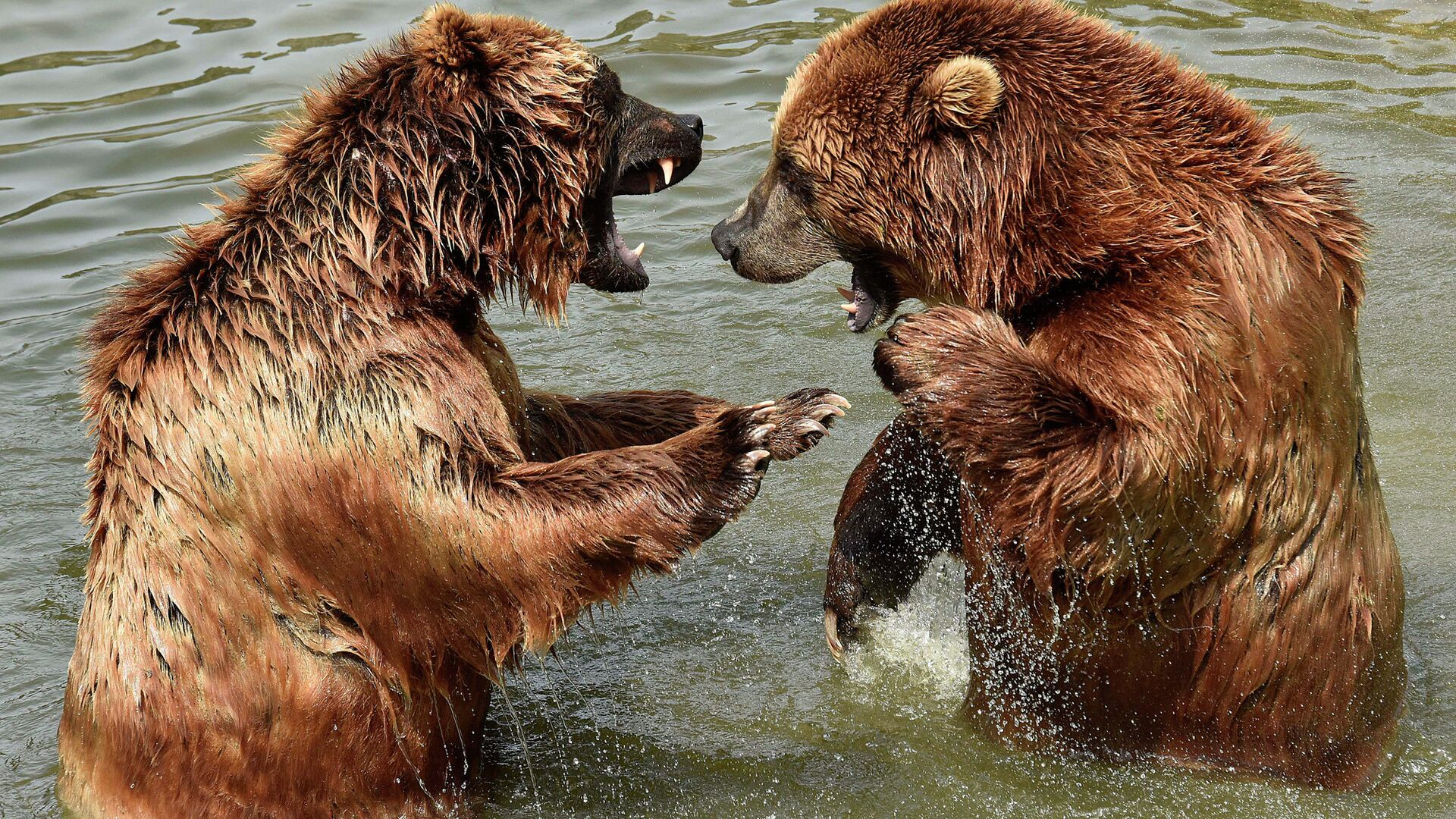 В Иркутской области полиция застрелила медведя на кладбище