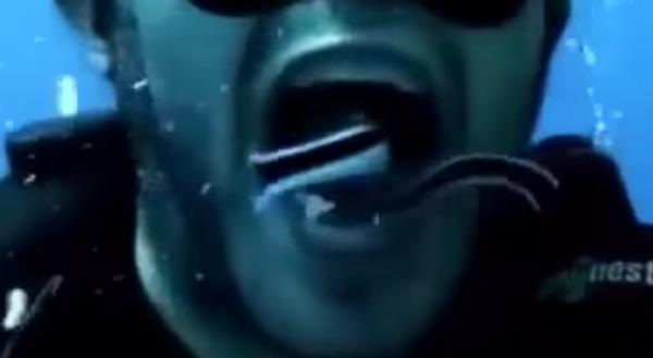 Как почистить зубы под водой с помощью… рыб!