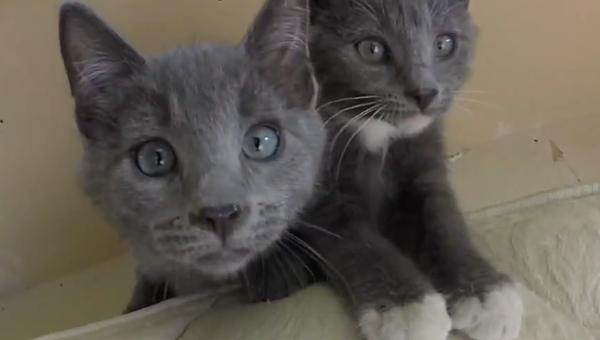 Что это у нас тут: котята знакомятся с объективом камеры