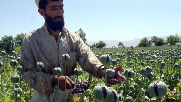 Афганский фермер собирает урожай опийного мака. Архивное фото
