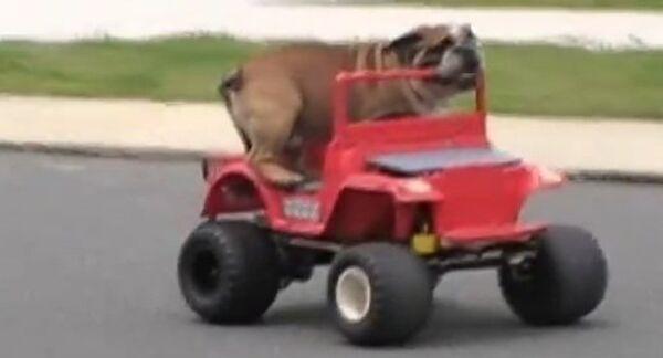 Настоящие звери за рулем