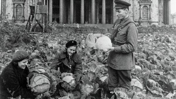 Урожай капусты на огороде у Исаакиевского собора во время блокады Ленинграда