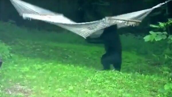 Гамак для медведя