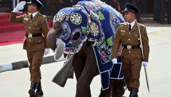 Полицейские со слоном во время парада в честь Дня победы в гражданской войне в Матаре, Шри-Ланка