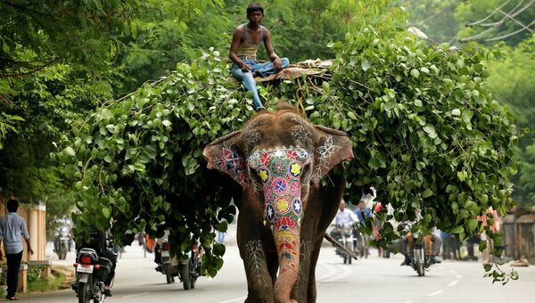 Слон на улице Аллахабада, Индия