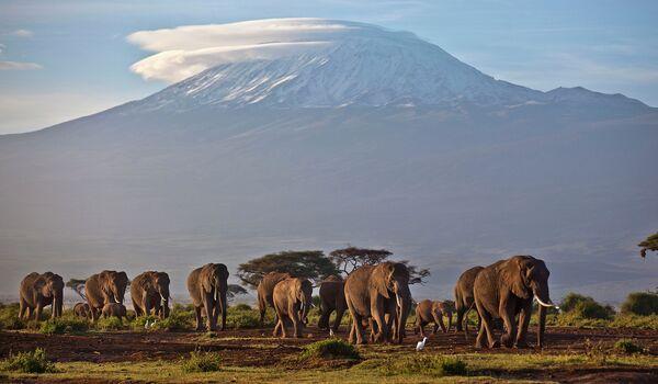 Слоны в национальном парке Амбосели (Кения) на фоне высочайшей горы в Африке Килиманджаро, расположенной на территории Танзании