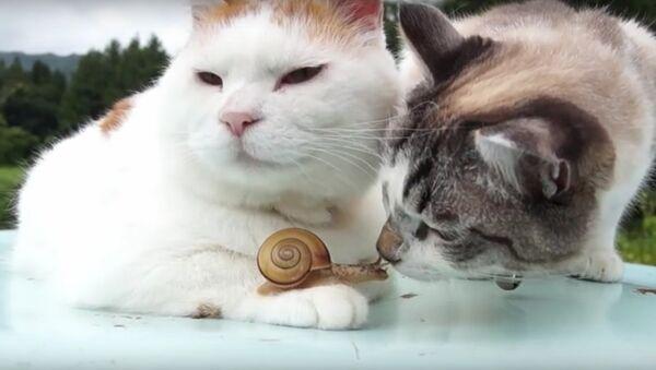 Коты завели себе питомца