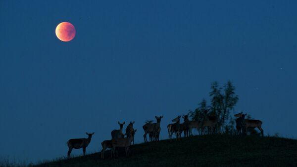 Кровавая луна. Архивное фото