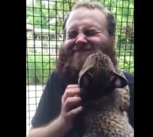 Рысь предпочитает бородатых
