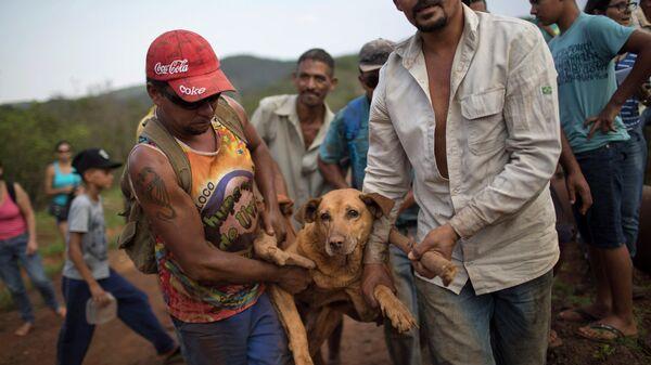 Спасение собаки, пострадавшей во время прорыва дамбы в Бразилии