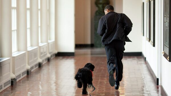 Президент США Барак Обама со своим псом Бо в Белом доме. Архивное фото