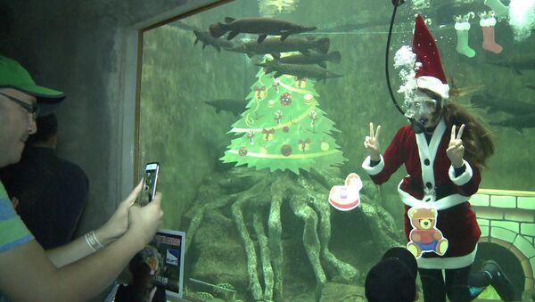 Аквалангистка в костюме Санта-Клауса плавала среди рыб в аквариуме зоопарка