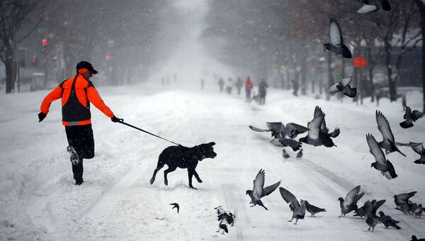 Житель Вашингтона после снегопада. Январь 2016