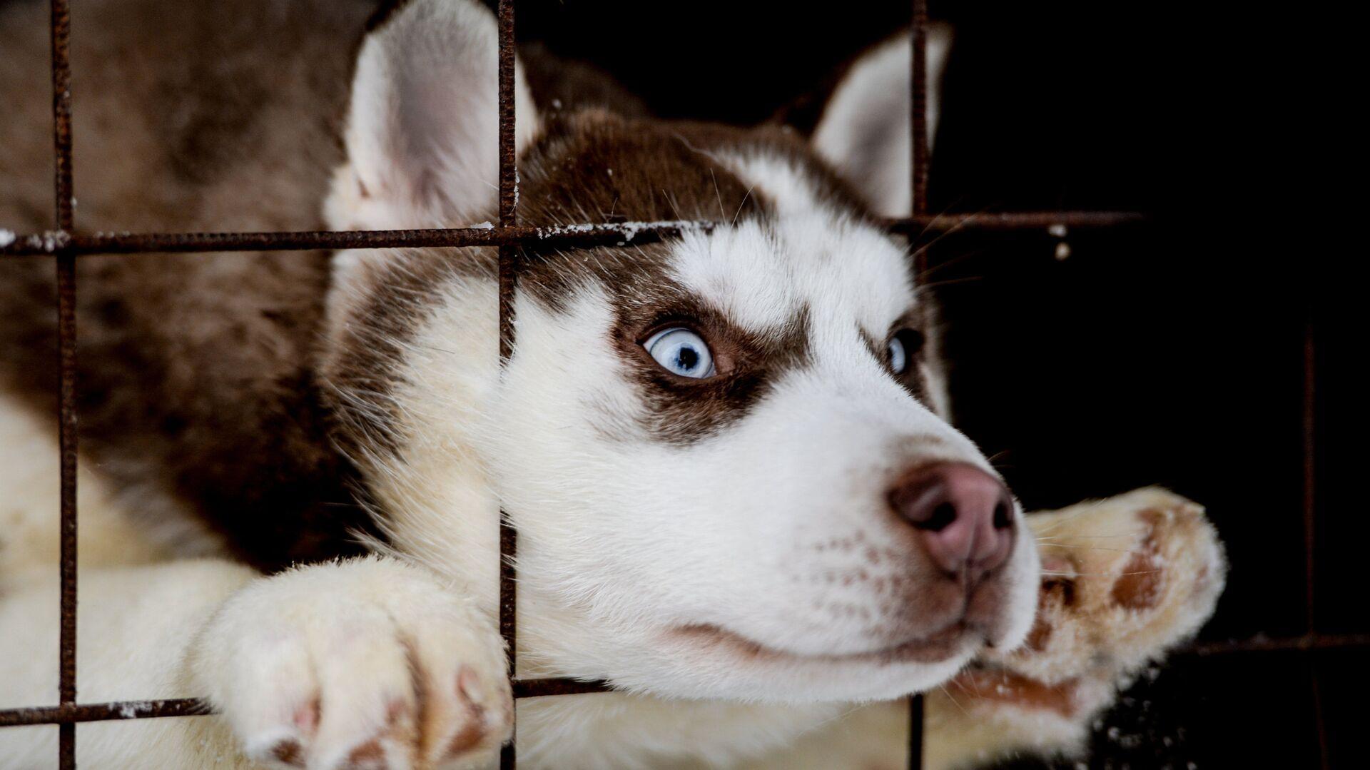 Собака в питомнике - РИА Новости, 1920, 02.08.2021
