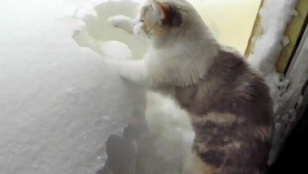 Кот, который точно знает, как справиться со снегом