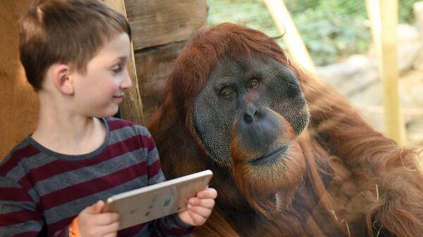 Британские ученые частично расшифровали язык орангутанов