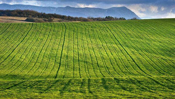 Озимое поле в окрестностях села Константиновка Симферопольского района Крыма. Архивное фото