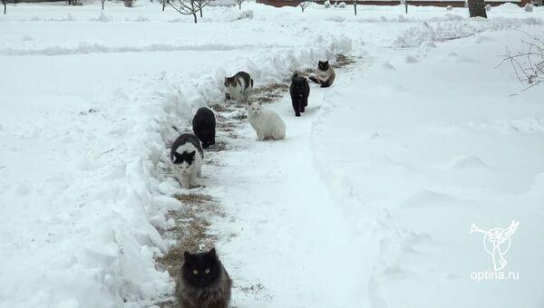 Коты поучаствовали в крестном ходе