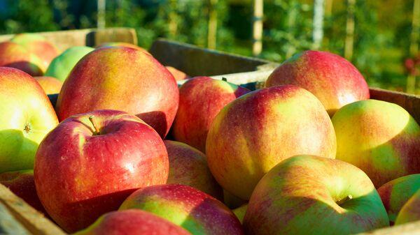 Ящик с яблоками. Архивное фото