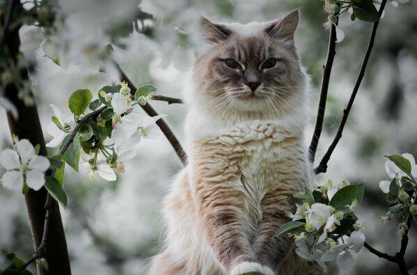 Кошка сидит на дереве на территории музея-заповедника Коломенское