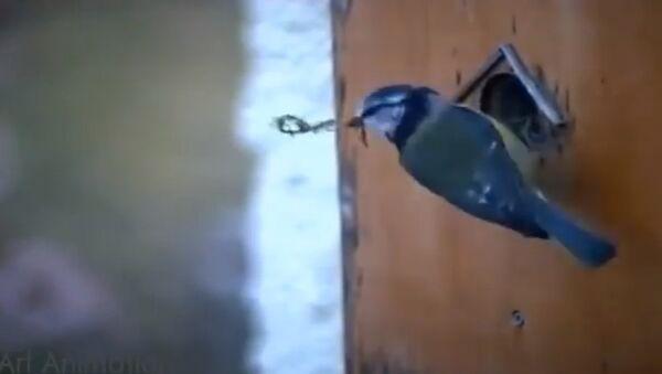 Птичка обустраивает домик