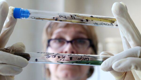 Сотрудница вирусологической лаборатории. Архивное фото