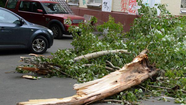 Поваленные деревья. Архивное фото
