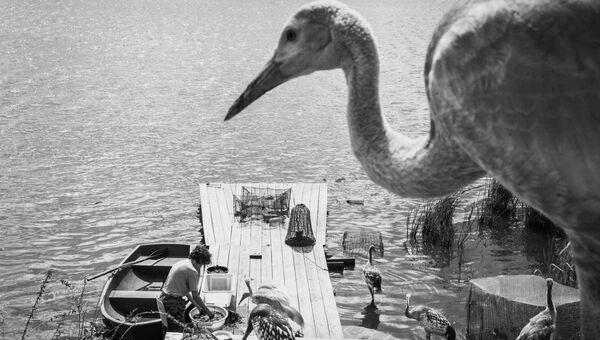Озеро белых журавлей