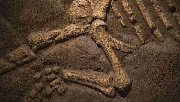 Окаменелые кости динозавра. Архивное фото