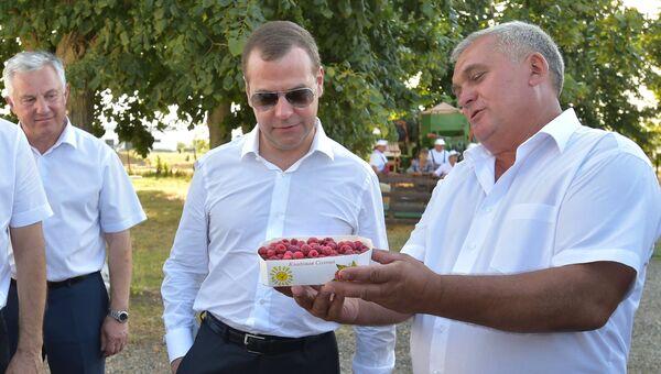 Дмитрий Медведев во время посещения крестьянско-фермерского хозяйства в Краснодарском крае