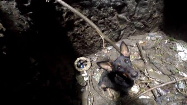 Собаку спасли из глубокого колодца