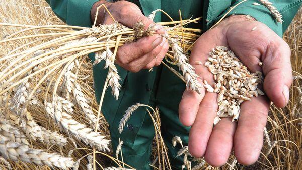 Урожай зерновых.Архивное фото