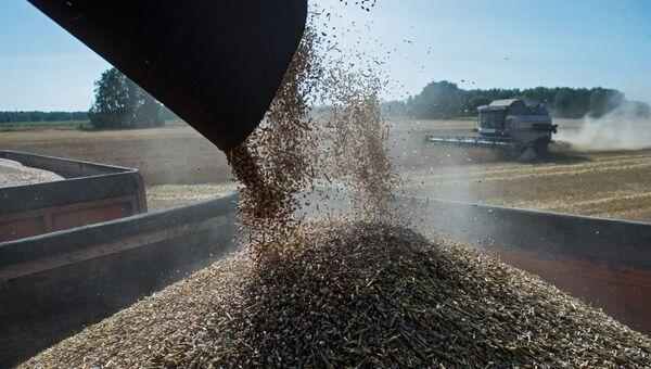 Уборка пшеницы в Омской области. Архивное фото