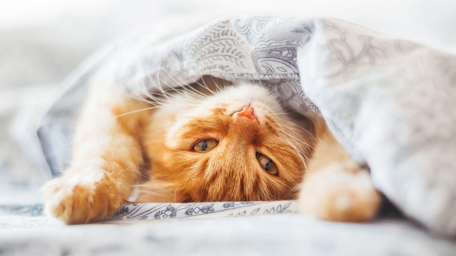 Кот под одеялом - РИА Новости, 1920, 08.04.2021