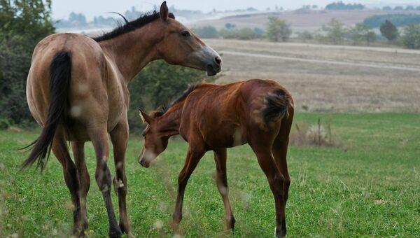 Лошади в окрестностях села Константиновка Симферопольского района в Крыму