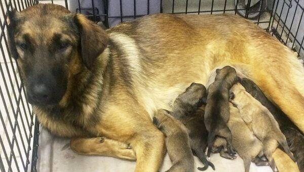 Собака и девять щенков, которые родились в понедельник в вагоне московской подземки