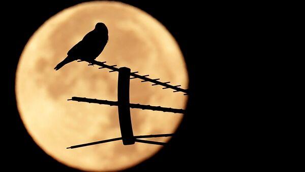 Птица сидит на антенне во время суперлуния. Архивное фото